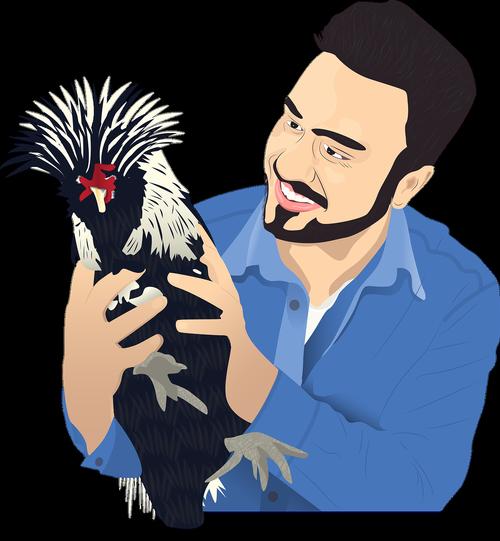 wonderland  poultry  chickens
