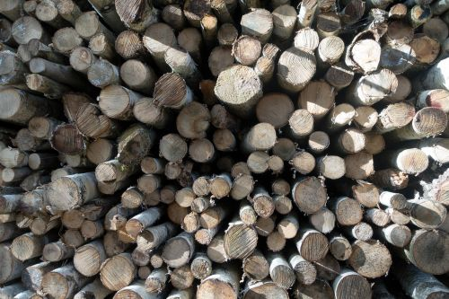 wood birch firewood