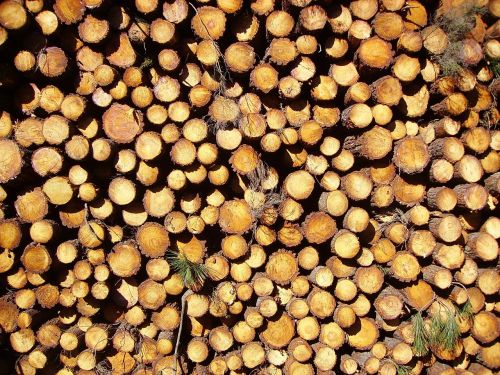 mediena,žurnalas,rąstai,pušis,bagažinė