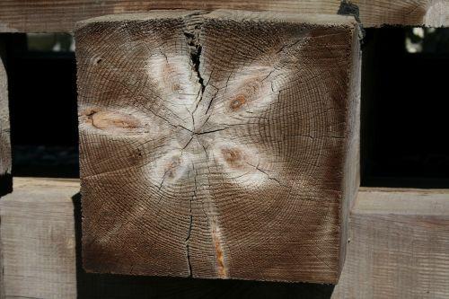 wood stump prism