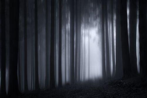 wood forest twilight