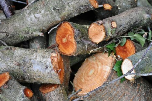 wood tree cut