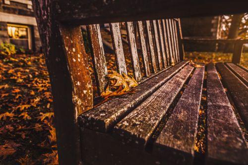 mediena,geras žvilgsnis,buvęs,kėdė,istorinis,senas