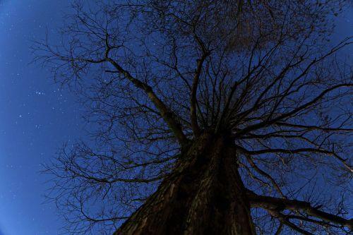 wood night star