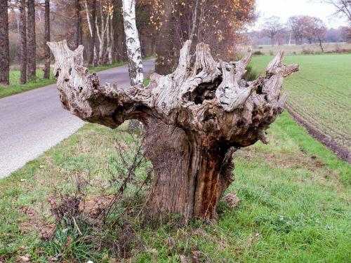 wood bony gnarled