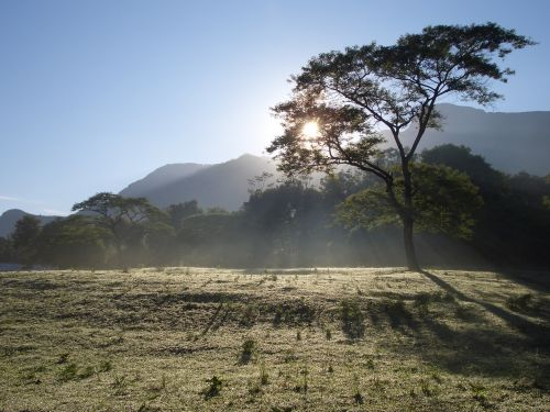 wood sol tanzania