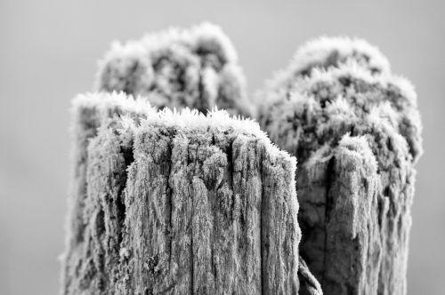 wood gel winter