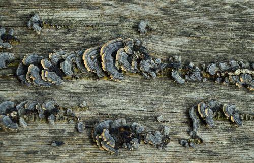 wood old wood mushrooms