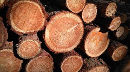 wood strains gesschnitten