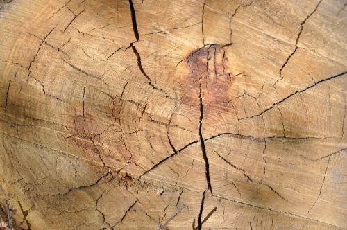 mediena,medienos medžiaga,tekstūra,bagažinė