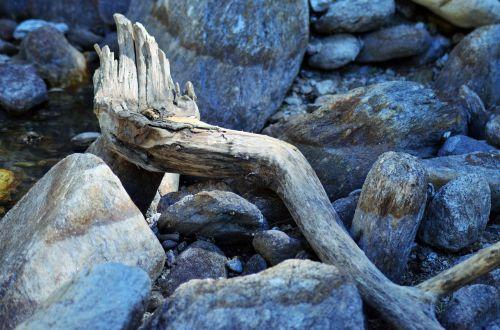 wood branch deadwood