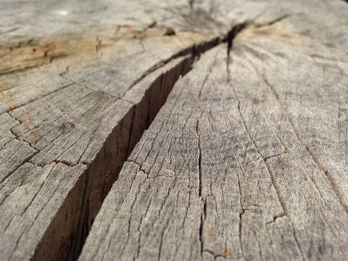 wood crack tree