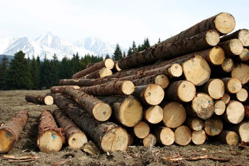 wood high tatry