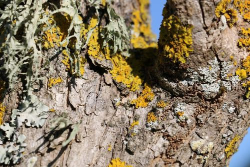 wood branch bark