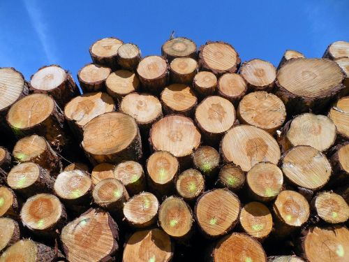 wood tree trunks forestry