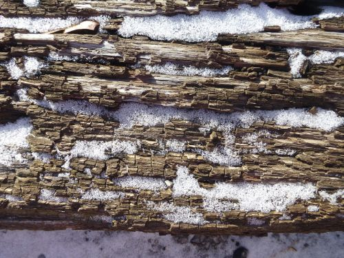 wood texture oak