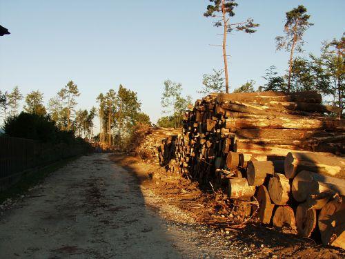 mediena,medžių kamienus,melas,mediena,mediena,holzstapel,gamta,miškas,audros žalos,Išvalyti
