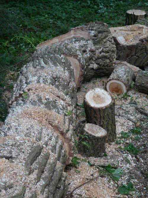 wood make wood saw