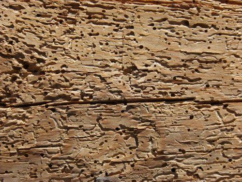 wood woodworm rotten