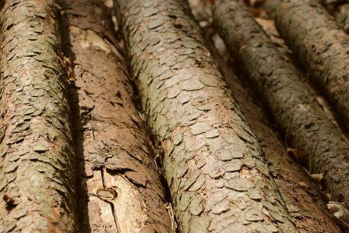 wood felling woodpile