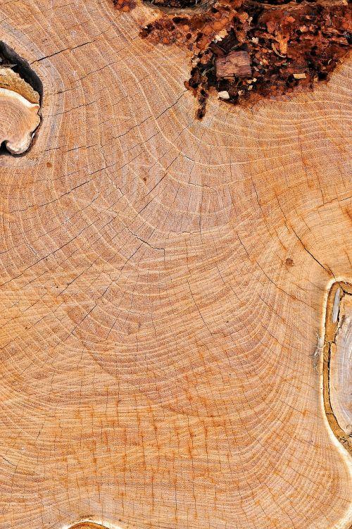 wood texture node