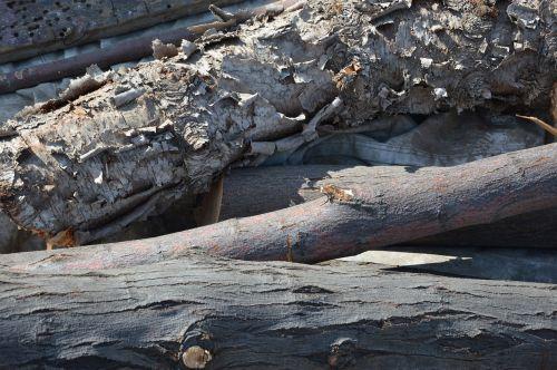 wood tree trunks bark