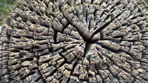 wood tree lumber