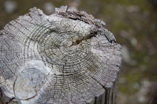 wood wood background stump