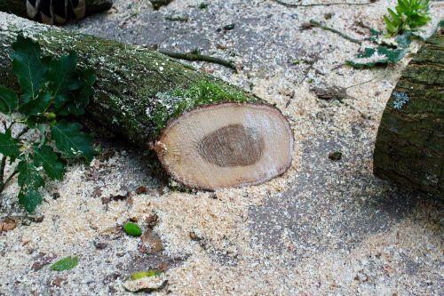 wood sawdust moss