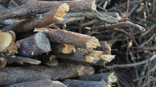 mediena,vienetai,medinis,krūva,malkos,gamta,filialas,filialai,supjaustyti,mediena,mediena