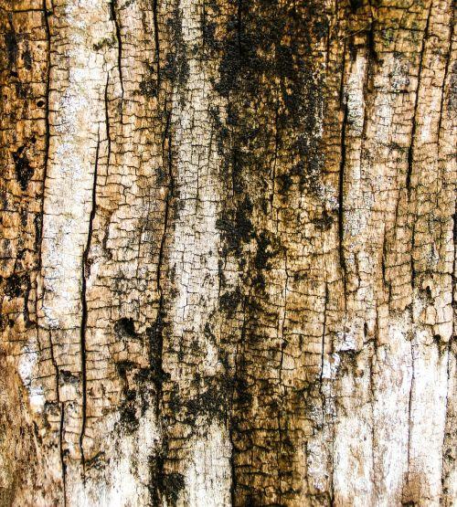 wood texture trunk