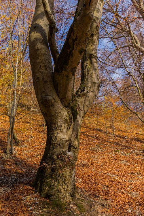 wood nature autumn