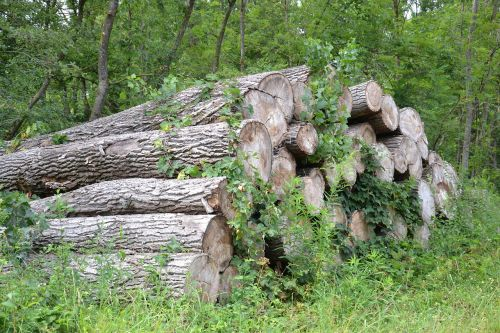 wood,forest,nature,log,trees,tree trunks,overgrown,green