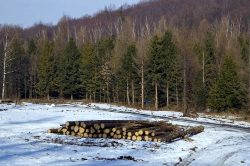 wood felling of the forest felling