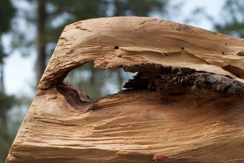 wood hole weathered
