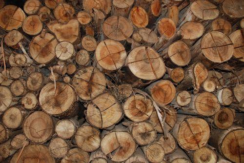mediena,ruda,bagažinė