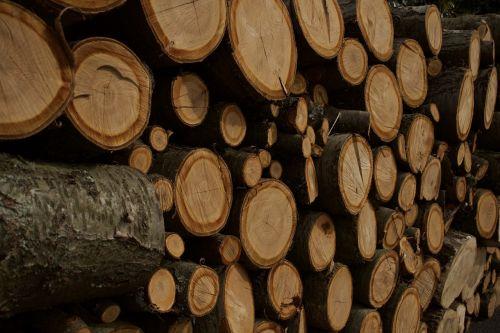 wood tribe trunks
