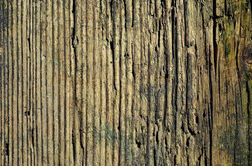 mediena,lenta,tekstūra,fonas,medinis,stiklainiai,struktūrą,medinės lentos,grindys,fonas,fono lentos,Iš arti,medienos tekstūra,ruda,medis,senas,gamta,lentos,miškas,medinės grindys,dailylentės,tapetai,tapetai,pjautinė mediena,natūralus,grindys,stiklainiai,aišku,bagažinė,įtrūkimai
