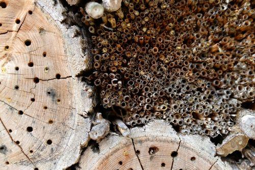 wood holes twigs