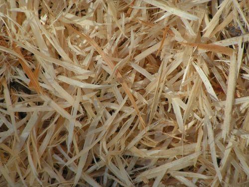 wood shavings pine