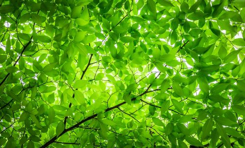 wood the leaves twig