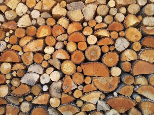 wood nature bio