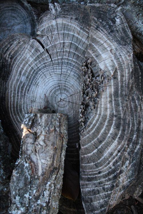 wood trunk rings
