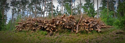 wood holzstapel timber industry