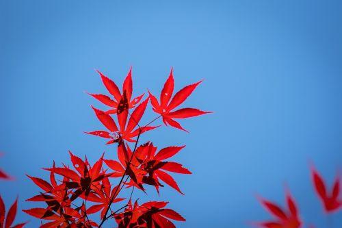mediena,gamta,lapai,mėlynas dangus,kraštovaizdis,dangus,medžiai ir dangus