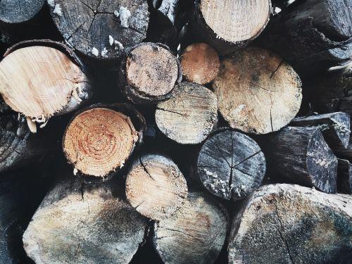 wood tree logging