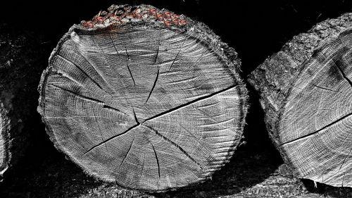 wood bale logs