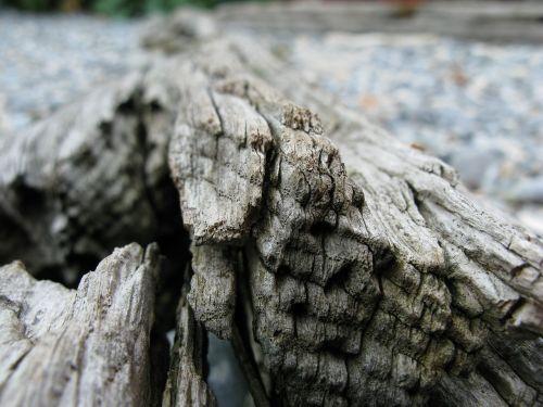 wood drift wood flotsam