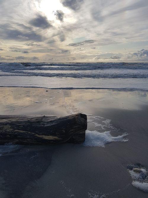wood,sand,beach,sea,sand beach,summer,drift wood,most beach