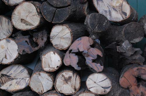 wood trunks lena
